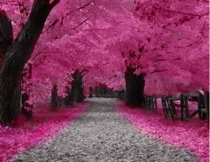 fuschia forest